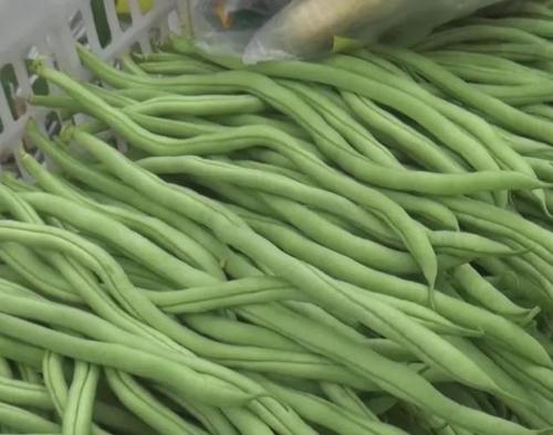 经济大棚蔬菜篇(二)豆角