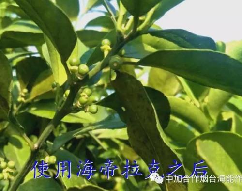 海帝拉克带你走进广西桂林